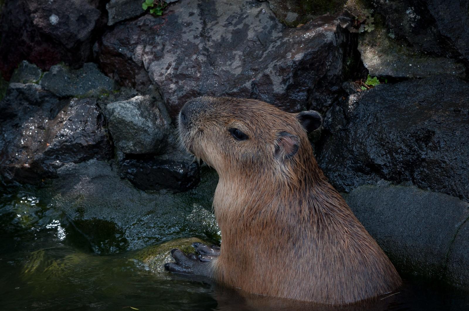 【瀬波まんじゅう】と【夕映えぶりゅれ】新潟県 瀬波温泉のお土産はこの2つがオススメ!